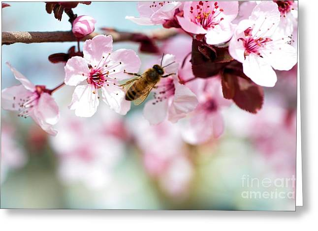 Busy Buzzing Around These Beautiful Blooms... Greeting Card