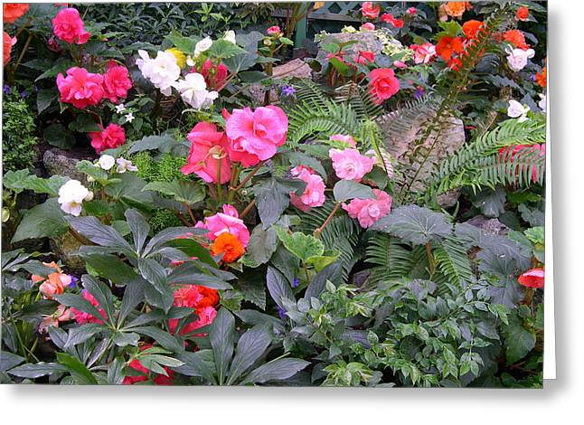 Butchart Begonia Garden Greeting Card by Claude McCoy