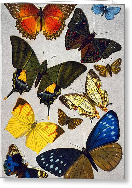 Butterflies, 19th Century Greeting Card by Granger