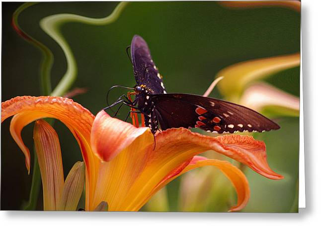 Butterflies Are Free... Greeting Card by Arthur Miller