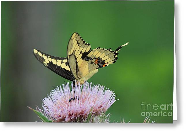Greeting Card featuring the photograph Butterflies Are Free by Kathy  White
