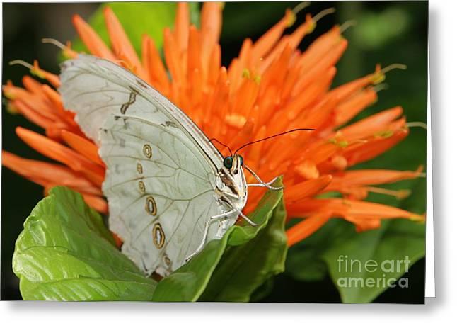 Butterflies Love Orange Flowers Greeting Card