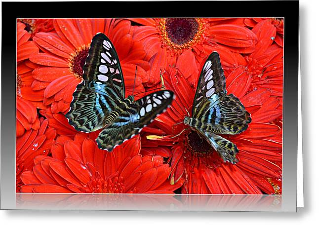 Greeting Card featuring the photograph Butterflies On Red Flowers by Rima Biswas