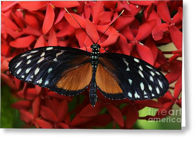 Butterfly 1 Greeting Card by Bob Christopher