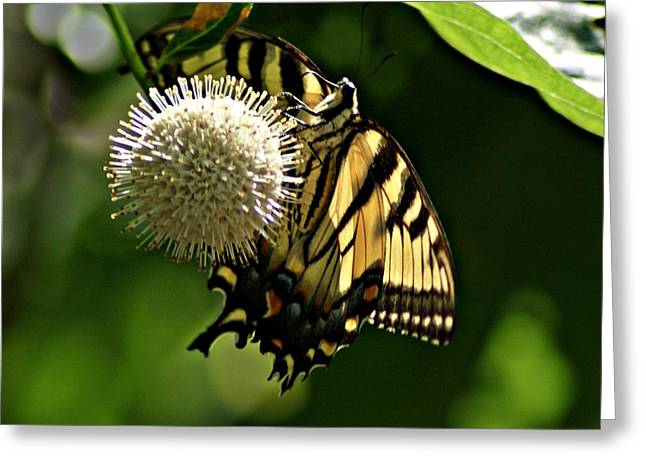 Butterfly 2 Greeting Card by Joe Faherty