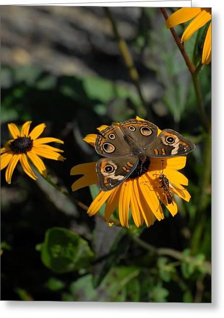 Butterfly 90 Greeting Card by Joyce StJames