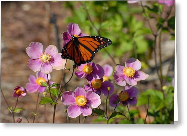 Butterfly 91 Greeting Card by Joyce StJames