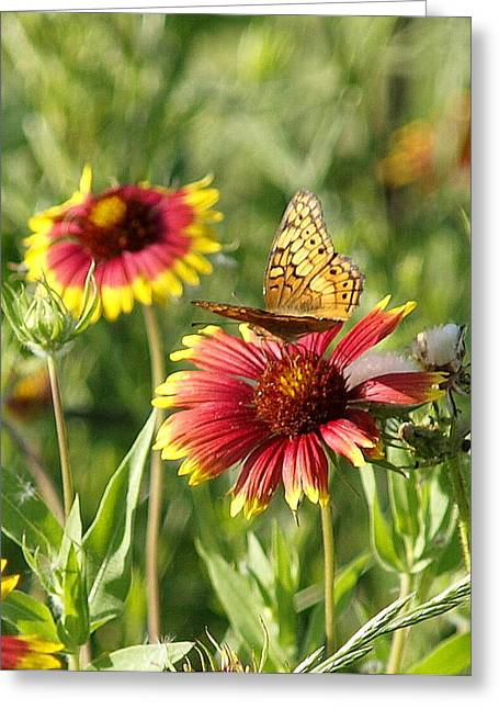 Butterfly And Blankets IIi Greeting Card by James Granberry