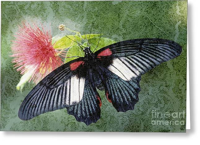Butterfly And Silktree - Fs000581-a Greeting Card