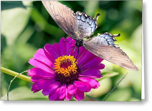 Greeting Card featuring the photograph Butterfly  by Anna Rumiantseva