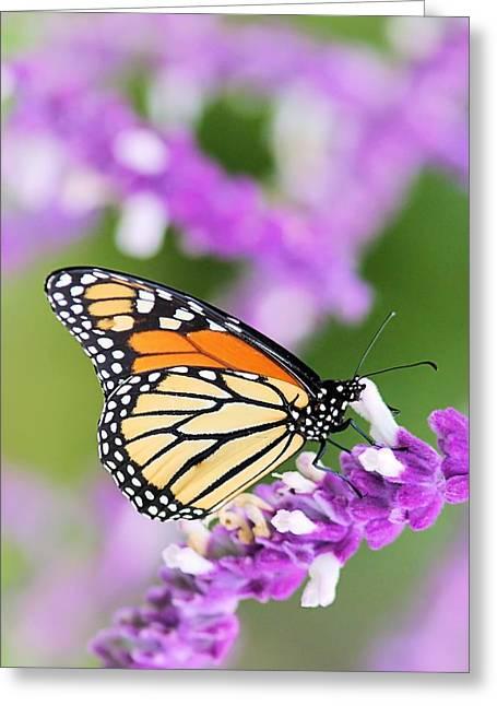 Butterfly Beauty Greeting Card by Elizabeth Budd