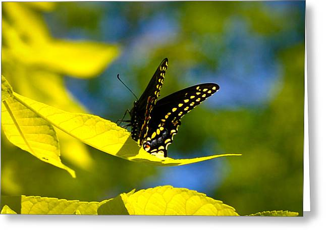Butterfly Beauty Greeting Card by Erica McLellan