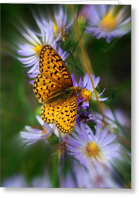 Butterfly Blur Greeting Card by Marty Koch
