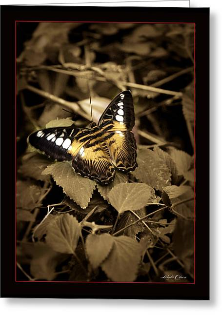 Butterfly Brown Greeting Card by Linda Olsen