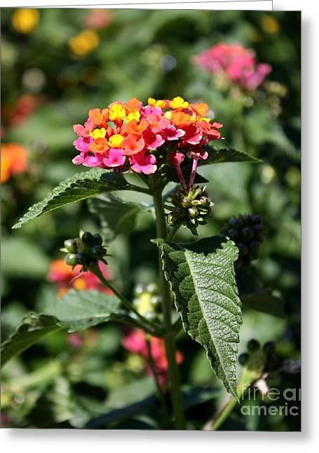 Butterfly Bush Greeting Card by Elizabeth Coats