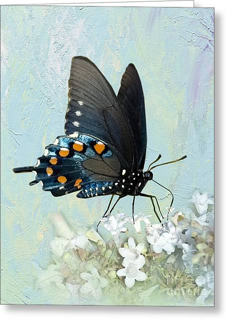 Butterfly Candy Greeting Card by Betty LaRue