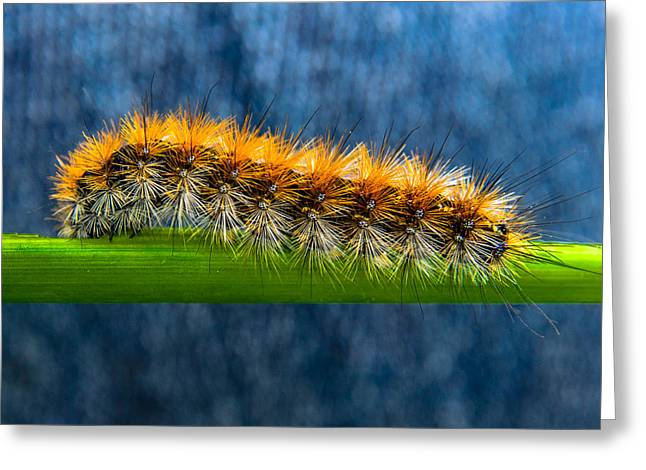 Butterfly Caterpillar Larva On The Stem Greeting Card