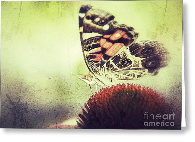 Butterfly Greeting Card by Christy Bruna