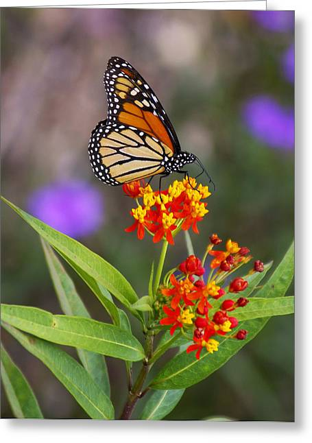 Butterfly Closeup Greeting Card