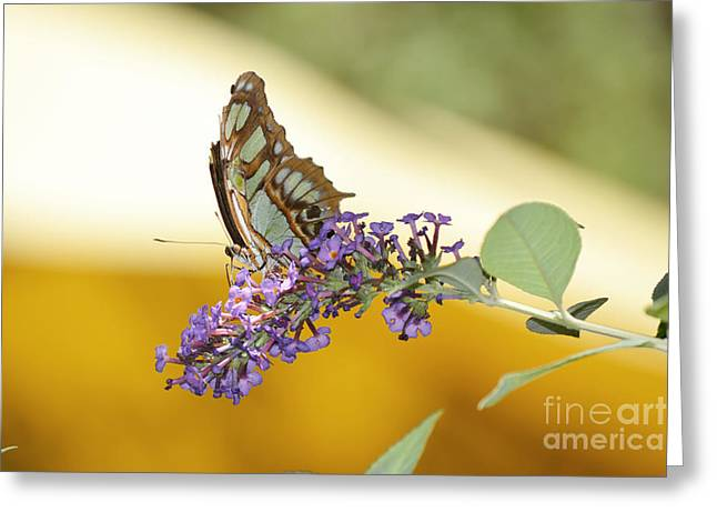 Butterfly Lavender Branch Greeting Card by Andrea Hazel Ihlefeld