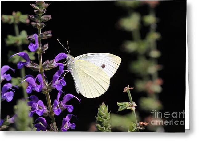 Greeting Card featuring the photograph Butterfly by Denise Pohl