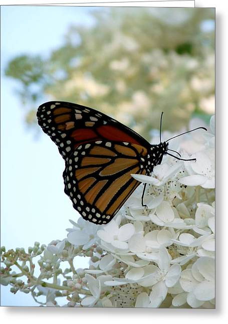 Butterfly Dreams II Greeting Card by Terry Eve Tanner