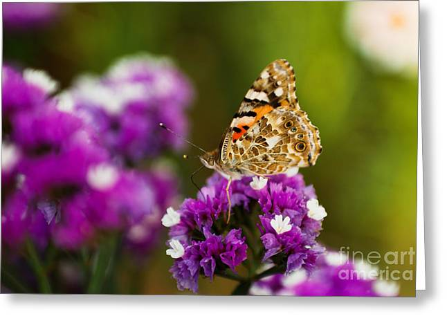 Butterfly Effect Greeting Card by Syed Aqueel