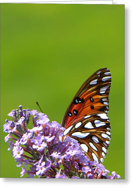 Greeting Card featuring the photograph Butterfly From Below by George Bostian