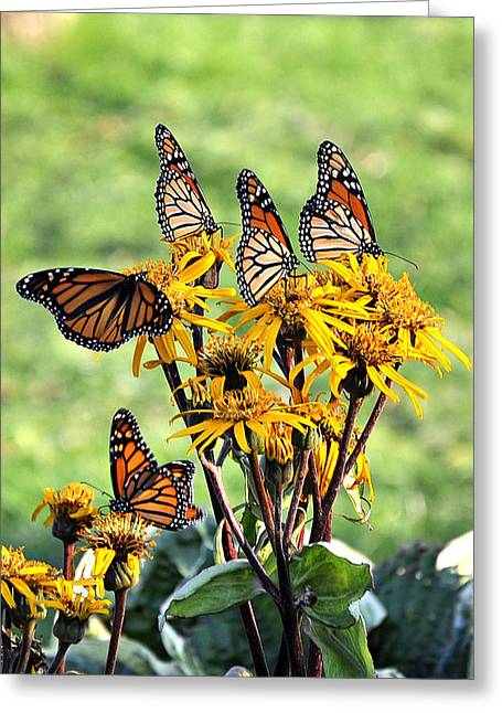 Butterfly Garden Greeting Card By Beckie Amidon Austin