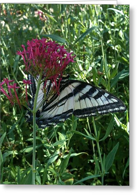 Greeting Card featuring the photograph Butterfly Garden by Jeremiah Colley