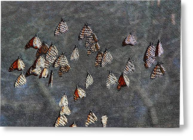 Greeting Card featuring the photograph Butterfly Gathering by Tam Ryan