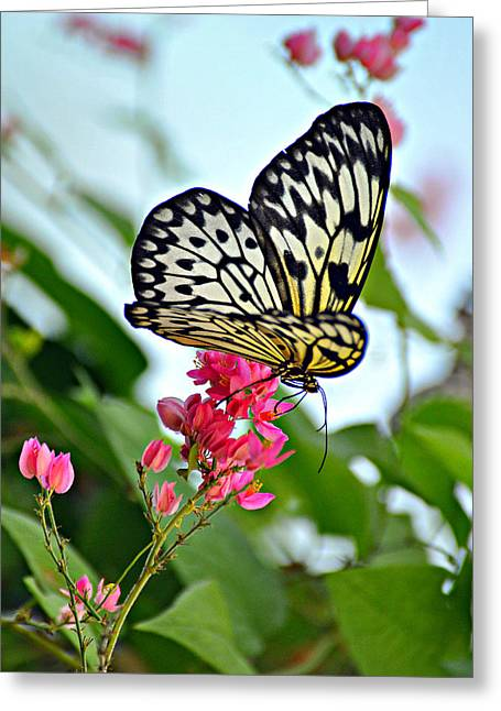 Butterfly Glow Greeting Card by Marty Koch