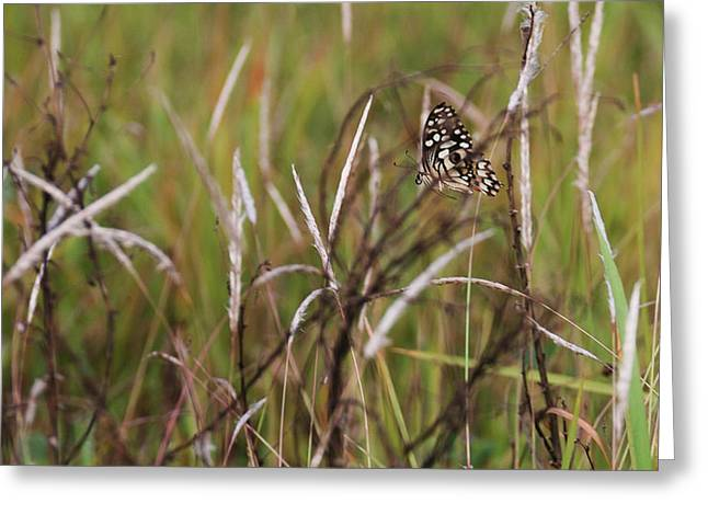 Greeting Card featuring the photograph Butterfly In Flight by Fotosas Photography