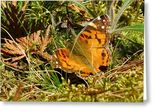 Butterfly In The Forest Greeting Card