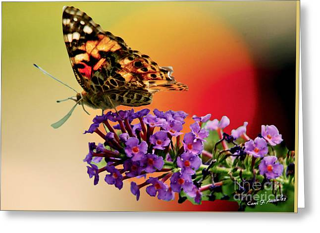 Butterfly In The Sunset Greeting Card by Carol F Austin