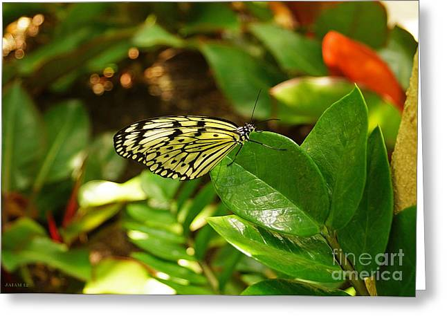 Butterfly In Yellow And Black Greeting Card
