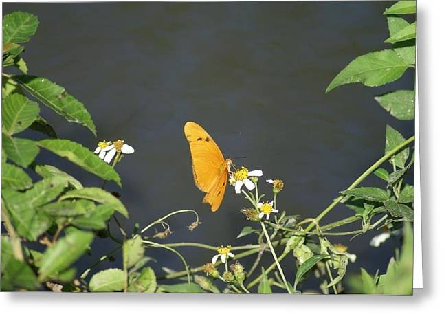 Greeting Card featuring the photograph Butterfly by Jerry Cahill