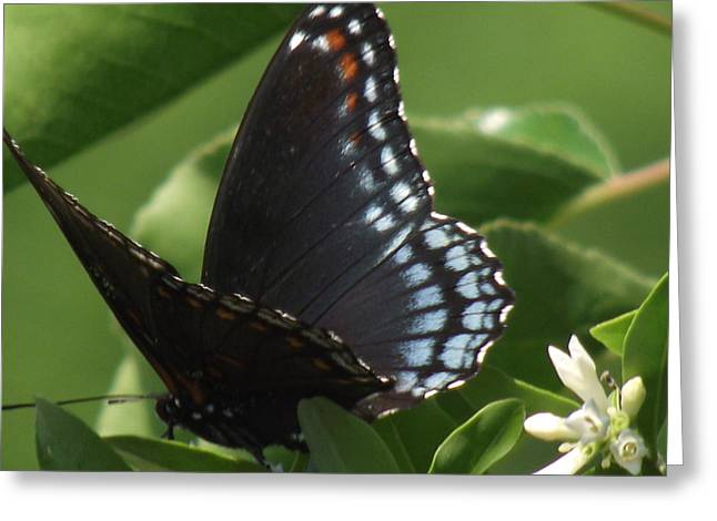 Butterfly Greeting Card by Katherine Woods