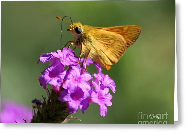Butterfly Kisses Greeting Card by Patrick Witz