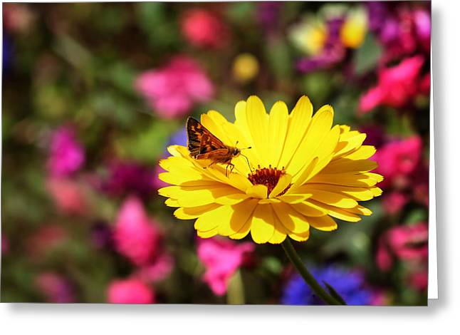 Butterfly Kissing Yellow Wildflower  Greeting Card