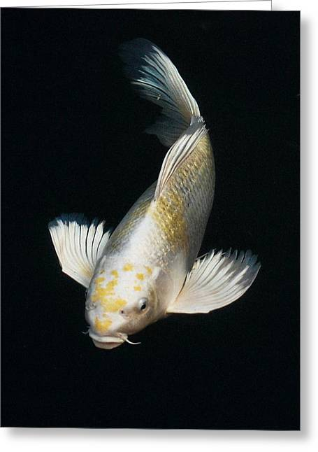 Butterfly Koi Greeting Card by Don Mann