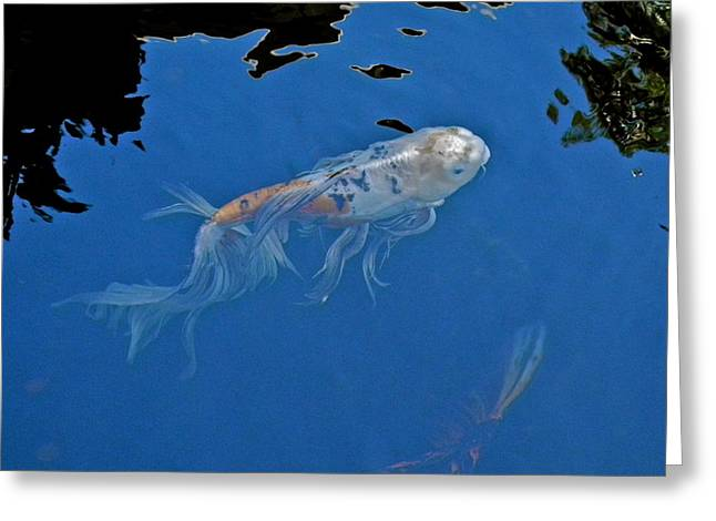 Butterfly Koi In Blue Sky Reflection Greeting Card by Kirsten Giving