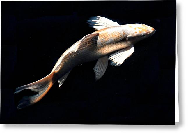 Butterfly Koi In Flight Greeting Card