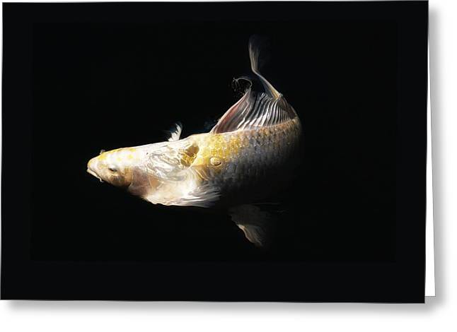 Butterfly Koi In Motion Greeting Card