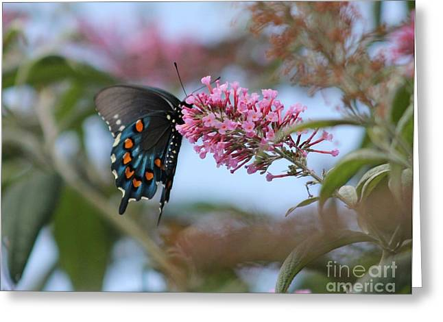Greeting Card featuring the photograph Butterfly by Laurinda Bowling