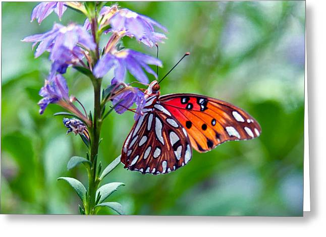 Butterfly Greeting Card by Linda Pulvermacher