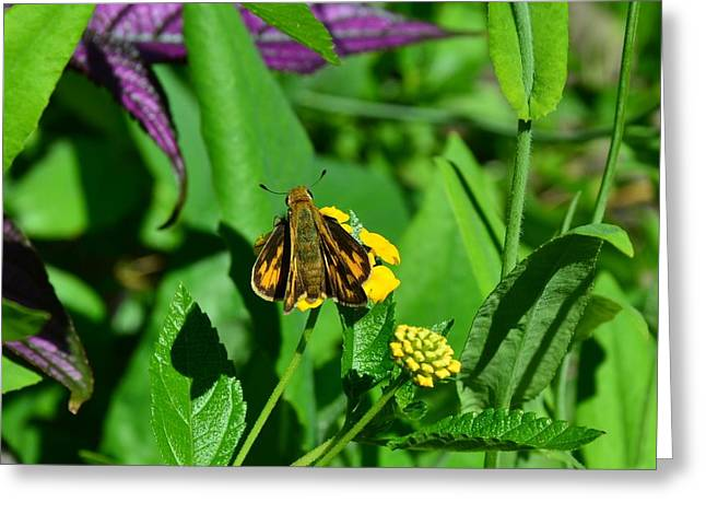 Butterfly Greeting Card by Mark Bowmer
