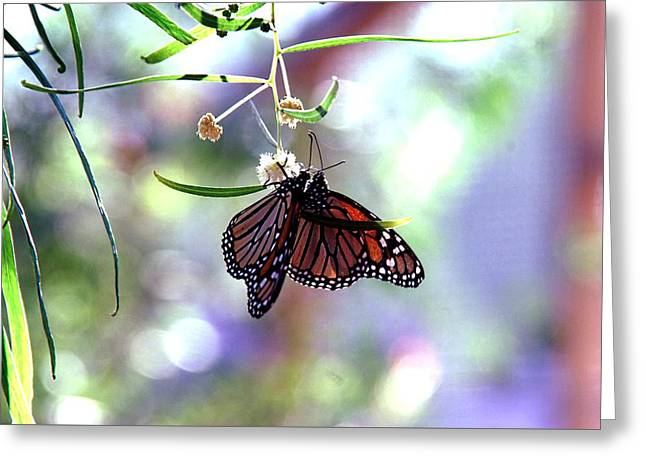 Greeting Card featuring the photograph Butterfly Meet-up by Tam Ryan