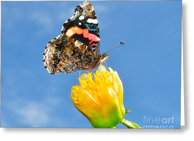 Greeting Card featuring the photograph Butterfly N Flower by Jack Moskovita