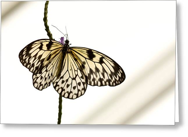 Greeting Card featuring the photograph Butterfly by Nick Mares